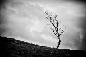 lone_tree_2_bw