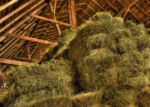 Color photo of hay bales piled in a hayloft