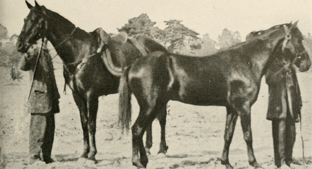 B&W photo of two dark horses, on saddled and one not. Each had a man holding its reins.
