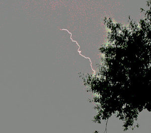 color photo of a green-leaved tree branch against a grey sky; a bolt of lightning is striking the tree
