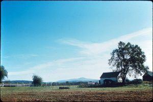 Color photo of a white farmhouse on the right with a tree near it. On the left is a white fence and two trees.