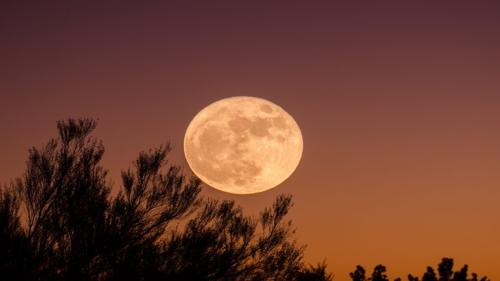 Photo of a full moon against pine trees. The moon is bright yellow-orange.