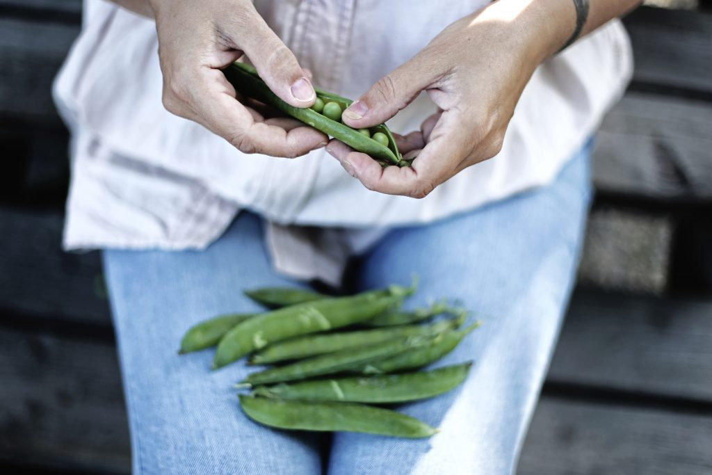 Woman's hands shelling peas with unshelled peas on her lap