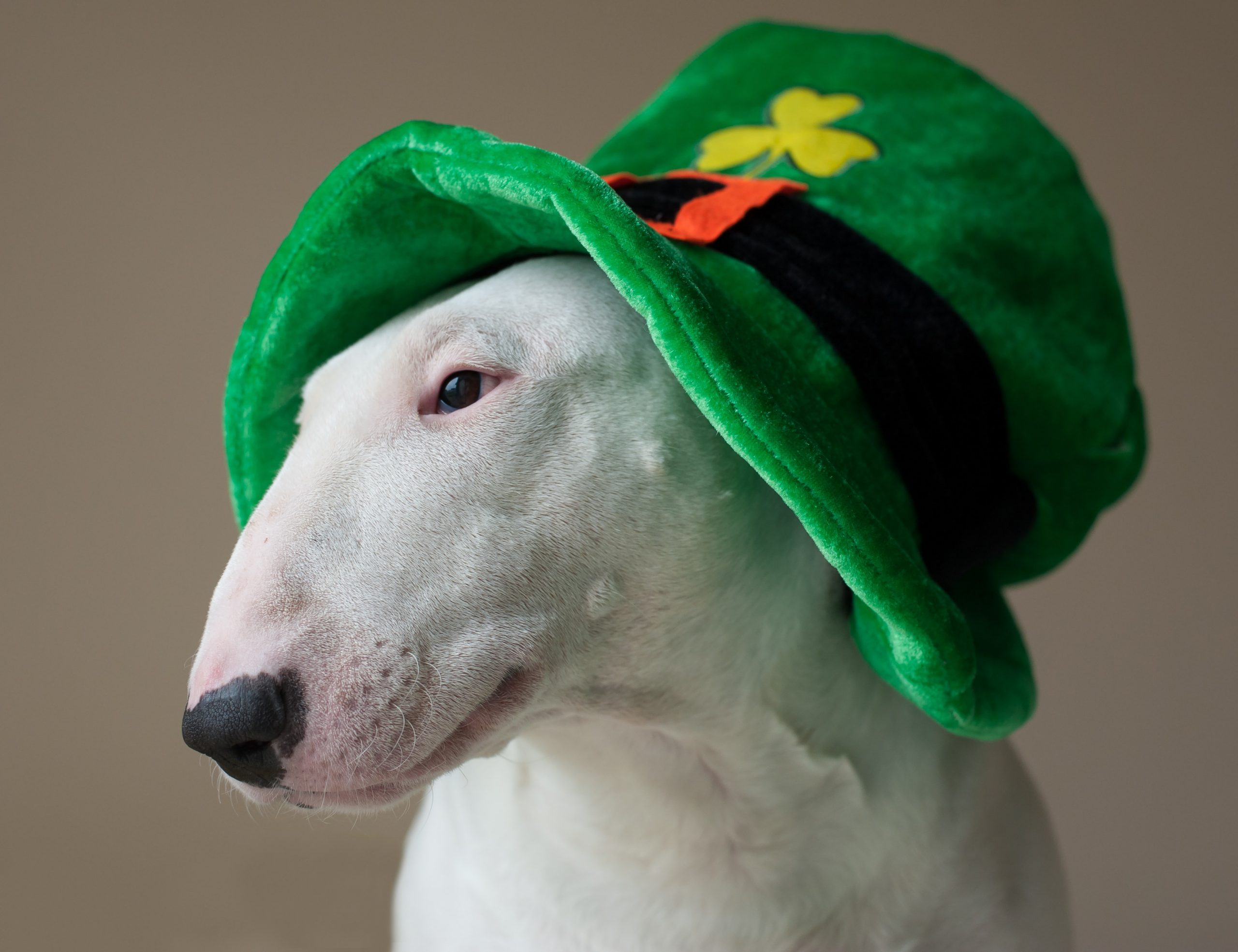 Don't pinch me! I'm not Irish! Or am I? (A St. Patrick's Day story)